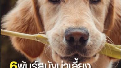 Photo of นิตยสาร Pet Care